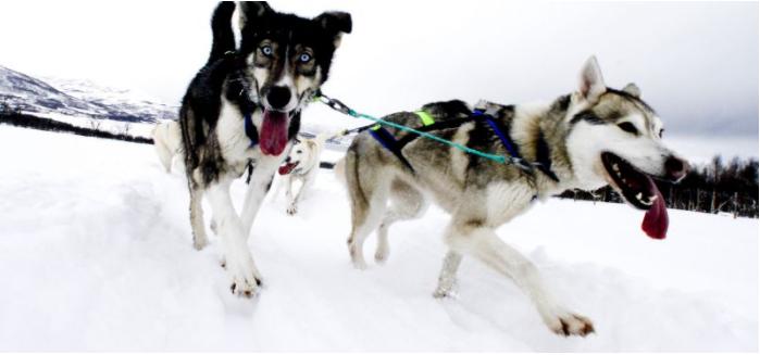 5B Hundeslædekørsel i Tromsø - Ruby Rejser